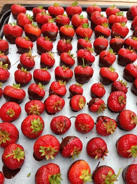 bild-chokladdoppad jordgubbe